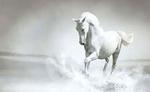 अब तारीख से घोड़े से भी तेज दौड़ेगा इन 3 राशियों का भाग्य