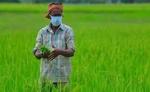 बीते वित्त वर्ष में कृषि निर्यात 17.34 प्रतिशत बढ़ा