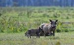 2020 में एक भी शिकार ना होने के कारण केन्या की गैंडों की आबादी 11 फीसदी बढ़ी